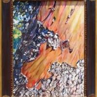 Arbutus menziesii 'Revelation'/ Madrone
