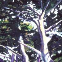 Cupressa macrocarpa 'Sentry'