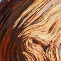Pinus longaeva 'Continuity'/ Bristlecone Pine