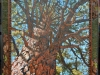 Pinus ponderosa 'Fireworks'/ Ponderosa Pine