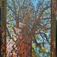 "Pinus ponderosa 'Fireworks'/ Ponderosa Pine 48"" x 36"" oil on canvas with handbuilt frame"